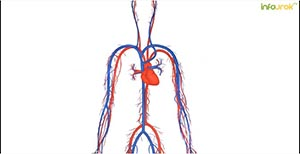 Организм человека. Органы дыхания