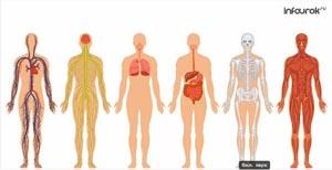 Особенности физического развития в подростковом возрасте