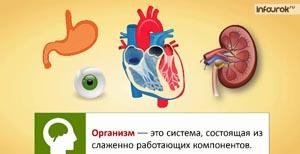 Органы кровообращения. Строение и работа сердца