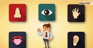 Понятие об анализаторах. Зрительный анализатор